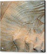 The Conch Acrylic Print