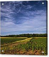 The Corn Fields Of Alabama Acrylic Print