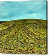 The Corn Rows Acrylic Print