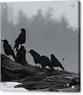 The Corvidae Family  Acrylic Print