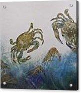 The Crabby Couple Acrylic Print