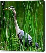 The Crane 2010. No.2 Acrylic Print