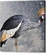 The Crane Acrylic Print