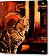 The Crane Yard Cat Acrylic Print