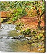 The Creek 0061 Acrylic Print