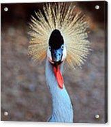 The Crowned Crane Acrylic Print