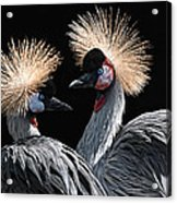 The Crowned Cranes Acrylic Print