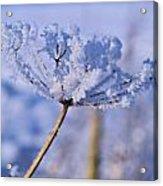 The Crystal Flower Acrylic Print by Dave Woodbridge