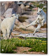 The Dance Of Joy Acrylic Print