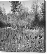 The Dance Of The Cattails Bw Acrylic Print