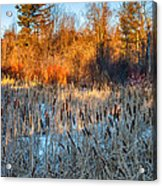 The Dance Of The Cattails Acrylic Print