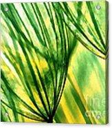 The Dandelion Acrylic Print by Odon Czintos