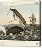 The Dangers Of Whale Fishing Acrylic Print