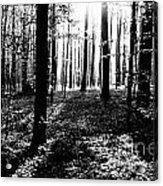 The Dark Forest Acrylic Print