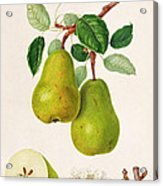 The D'auch Pear Acrylic Print by William Hooker