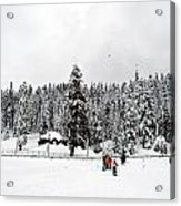 The Dazzle Of Winter Trees At Gulmarg - Kashmir- India- Viator's Agonism Acrylic Print by Vijinder Singh
