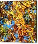The Dazzling Colors Of Fall Acrylic Print