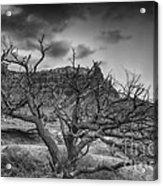 The Dead Pinion Tree Hdr Bw Acrylic Print