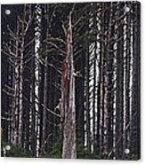 The Deep Dark Sharp Forest Acrylic Print