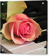 The Delicate Rose Acrylic Print