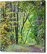 The Dense Forest Acrylic Print
