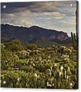 The Desert Is Wearing A Carpet Of Green  Acrylic Print