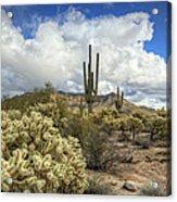 The Desert Southwest Acrylic Print