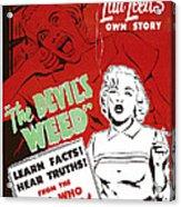 The Devils Weed, Aka Wild Weed, Aka She Acrylic Print