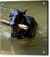 The Dog Days Of Summer Acrylic Print