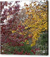 The Dogwood And The Maple Leaves Acrylic Print