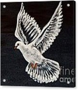 The Dove Acrylic Print