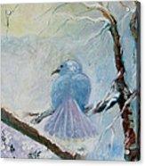 The Dove Acrylic Print by Susan Hanlon