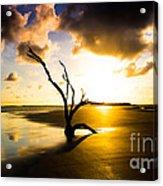 The Driftwood Tree Folly Beach Acrylic Print