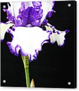 The Edge Of Purple Acrylic Print