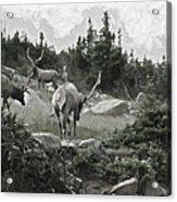 The Elk Painterly 2 Acrylic Print