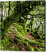 The Elven Forest No2 Wide Acrylic Print