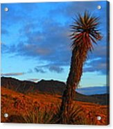 The Endangered Wild West Acrylic Print