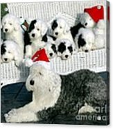The Entire Family Acrylic Print by Kathleen Struckle
