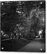 The Evening Foliage Tunnel Acrylic Print