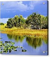 The Everglades Acrylic Print