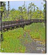The Everglades Of Texas Acrylic Print