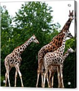 The Extended Family Acrylic Print