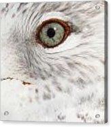 The Eye Of The Gull Acrylic Print
