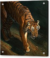 The Eye Of The Tiger Acrylic Print
