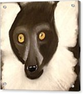 The Face Of A Lemur Acrylic Print