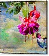 The Face Of Fuchsia Acrylic Print