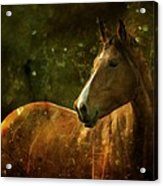 The Fairytale Horse Acrylic Print