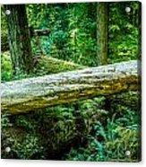 The Fallen Collection 12 Acrylic Print