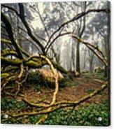 The Fallen Tree II Acrylic Print