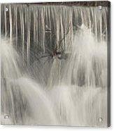 The Falls Acrylic Print by Cindy Rubin